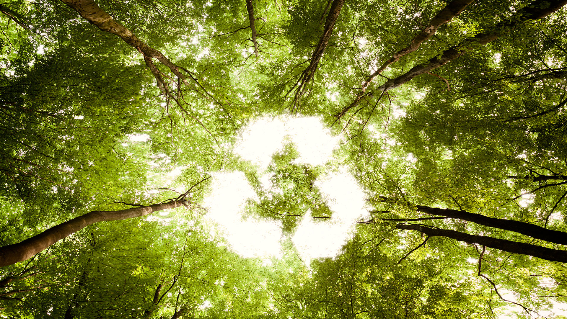 Green Week Tuesday – Easy Ways to Reduce Your Carbon Footprint