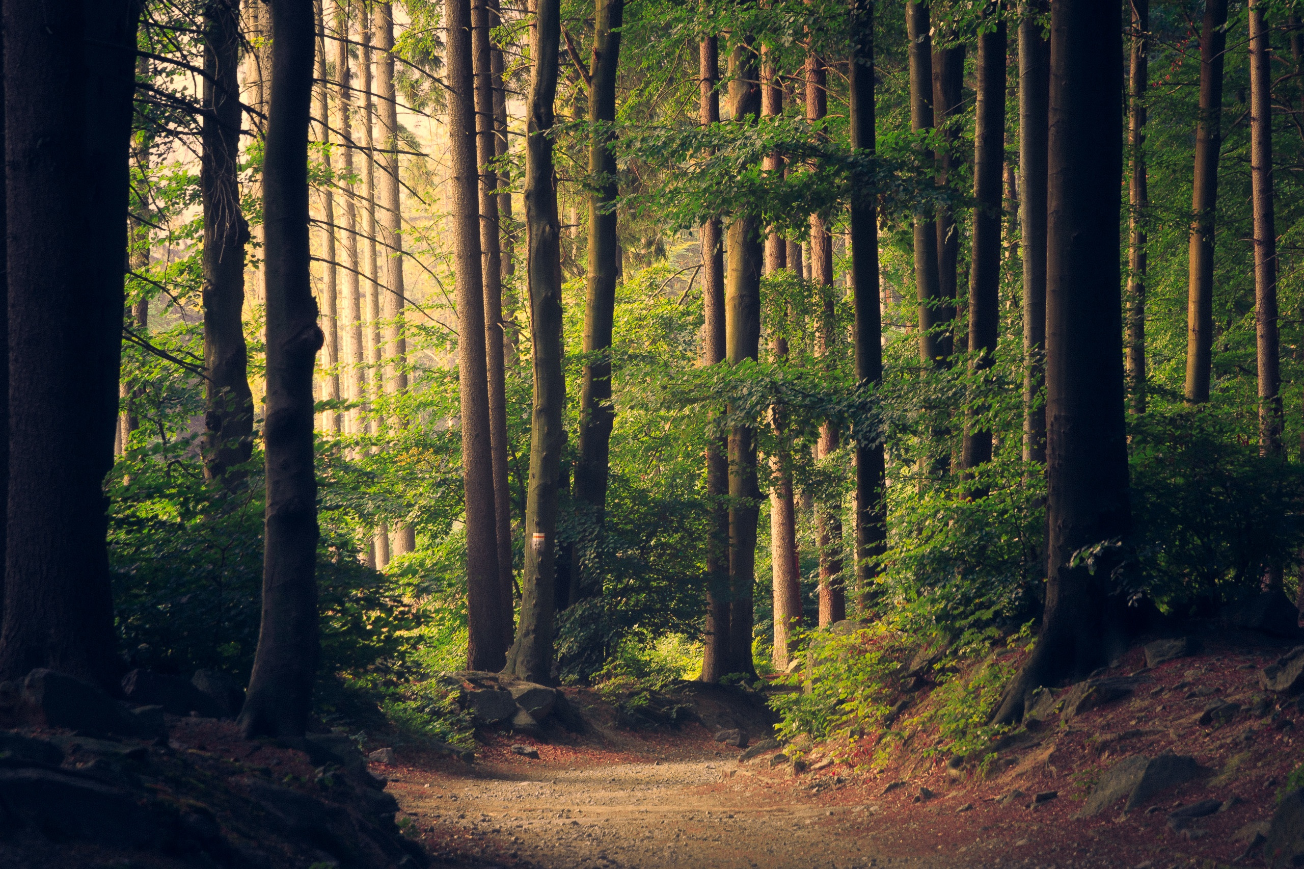 Why Environmental Change Should Be Embraced To Succeed In Agile